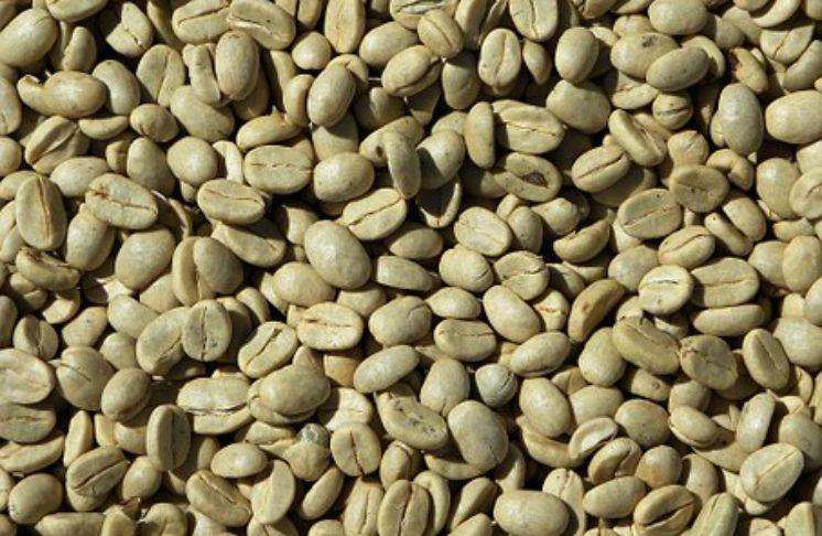 Mała czarna to już przeżytek, czas poznać zieloną kawę! Zielona kawa – właściwości, zastosowanie