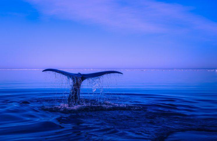 Światowy Dzień Oceanów